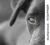 black dog face close up  with... | Shutterstock . vector #543699889