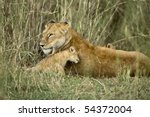 lioness and her cub  serengeti...   Shutterstock . vector #54372004