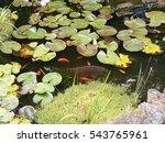 garden pond  water lilies  and... | Shutterstock . vector #543765961