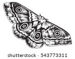 pen and ink drawing of a moth | Shutterstock .eps vector #543773311