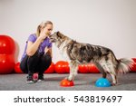 Stock photo dog training in the fitness club 543819697