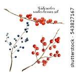 Watercolor Winter Berries Set....