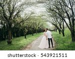 amazing wedding couple in the... | Shutterstock . vector #543921511