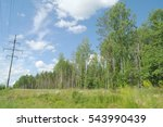 Deciduous Birch Forest In...