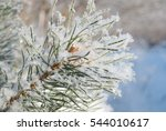 the branch of a young pine tree ... | Shutterstock . vector #544010617