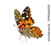 Flying Painted Lady Butterfly ...