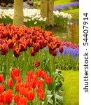 Keukenhof Gardens Netherlands...