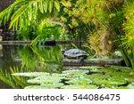 Turtle Sunbathing On A Rock In...