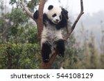 cute baby panda   Shutterstock . vector #544108129