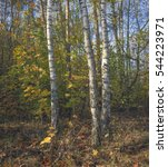 autumn in the park   Shutterstock . vector #544223971