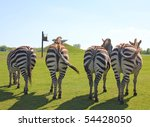 Zebras Showing There Back