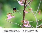 sunbird bird sunbird bird in... | Shutterstock . vector #544289425