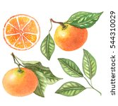 watercolor tangerine fruit set... | Shutterstock . vector #544310029