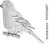 little bird   stylized sketch   ... | Shutterstock .eps vector #544333687