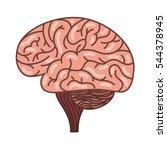 human brain organ isolated icon ... | Shutterstock .eps vector #544378945