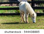 A White Horse Grazing In A...