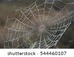 water droplets in a spider web | Shutterstock . vector #544460107