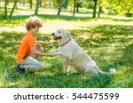 beautiful dog gives a shake to... | Shutterstock . vector #544475599