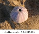 Small photo of Round pink seashell in Inhaca Island, Mozambique