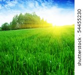 green field forest and sun. | Shutterstock . vector #54455230