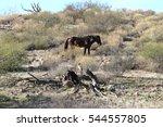 Wild Horse In Arizona