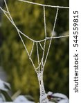 Frosted Spiderweb Against...