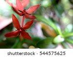 tiny red flower zoomed.   Shutterstock . vector #544575625