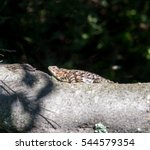 mexico has many lizards that... | Shutterstock . vector #544579354