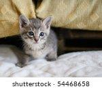 Stock photo cat kitten 54468658