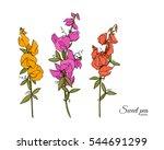 flowers    sweet pea  lathyrus... | Shutterstock .eps vector #544691299