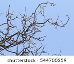 Leafless Tree Branches Against...