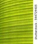 Small photo of Fabulous of Curved Lines on brighten banana leaf for beauty background