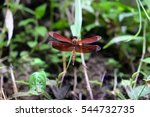 Red Dragonfly Sitting On Stick...