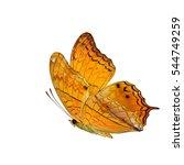 beautiful flying butterfly ... | Shutterstock . vector #544749259
