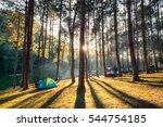 pine forest sunlight shine on... | Shutterstock . vector #544754185