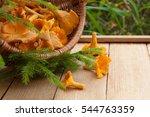 edible mushroom chanterelle in... | Shutterstock . vector #544763359