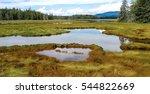New England Marshland   Grassy...