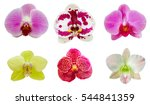 collection set of orchid flower ... | Shutterstock . vector #544841359