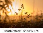 plants in nature | Shutterstock . vector #544842775