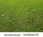 fresh green grass field texture ... | Shutterstock . vector #544856479