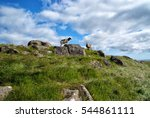 sheep animals with wool... | Shutterstock . vector #544861111