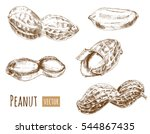 set of peanuts  whole nuts ... | Shutterstock .eps vector #544867435