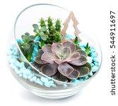 Echeveria Succulents In...