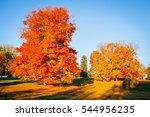 autumn season with fall foliage.... | Shutterstock . vector #544956235