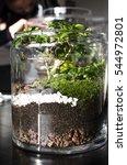gorgeous terrarium | Shutterstock . vector #544972801