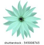 Garden White Turquoise Flower ...