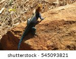 lizard   africa   kenya. a... | Shutterstock . vector #545093821