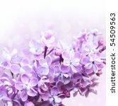 lilac border | Shutterstock . vector #54509563