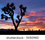 The Silhouette Of A Joshua Tree ...