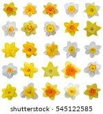 Spring Flowers  Daffodil...